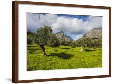 Blooming Field with Olive Trees, Crete, Greek Islands, Greece, Europe-Michael Runkel-Framed Photographic Print