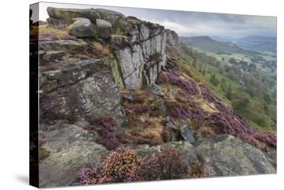 Heather on Curbar Edge at Dawn-Eleanor Scriven-Stretched Canvas Print