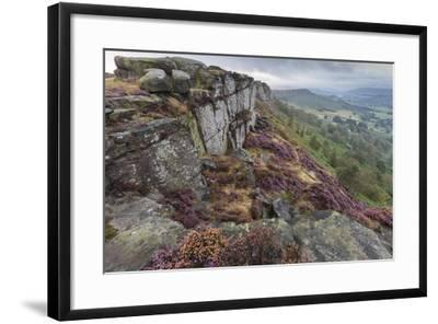 Heather on Curbar Edge at Dawn-Eleanor Scriven-Framed Photographic Print