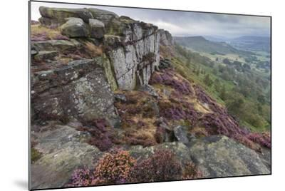 Heather on Curbar Edge at Dawn-Eleanor Scriven-Mounted Photographic Print