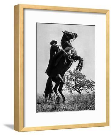 Le Signe De Zorro the Sign of Zorro De Norman Foster Et Lewis R. Foster Avec Guy Williams 1958--Framed Photo