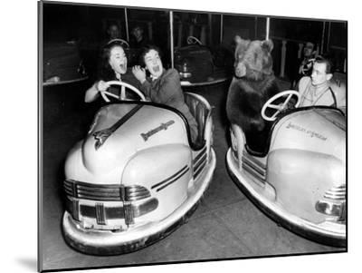 Brown Bear of Bertram Mills Circus in Bumper Cars Dodgems December 15, 1954--Mounted Photo