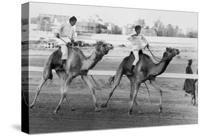 Camel Race in Saudi Arabia in Honour of Queen Elizabeth Ii's Visit to To the Middle East, 1979--Stretched Canvas Print