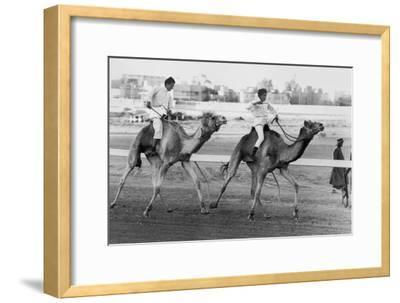 Camel Race in Saudi Arabia in Honour of Queen Elizabeth Ii's Visit to To the Middle East, 1979--Framed Photo