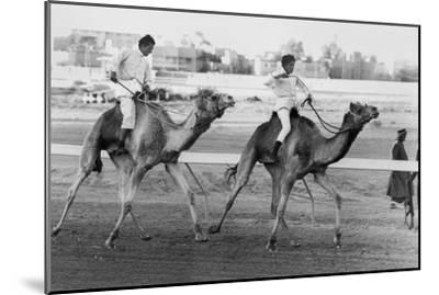 Camel Race in Saudi Arabia in Honour of Queen Elizabeth Ii's Visit to To the Middle East, 1979--Mounted Photo