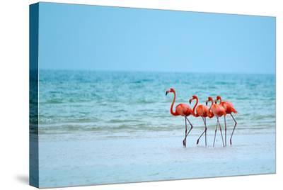 Flamingos and Ocean-Lantern Press-Stretched Canvas Print