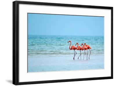 Flamingos and Ocean-Lantern Press-Framed Art Print
