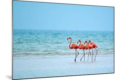 Flamingos and Ocean-Lantern Press-Mounted Art Print