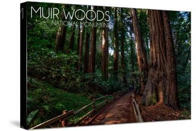 Muir Woods National Monument, California - Path #2-Lantern Press-Stretched Canvas Print