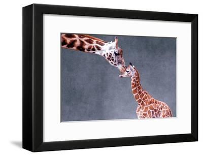 Giraffe and Calf-Lantern Press-Framed Premium Giclee Print