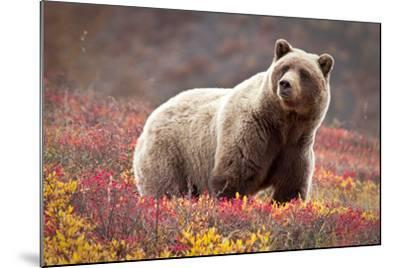 Grizzly Bear and Flowers-Lantern Press-Mounted Art Print