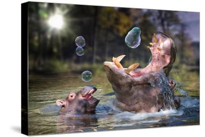 Hippos and Bubbles-Lantern Press-Stretched Canvas Print