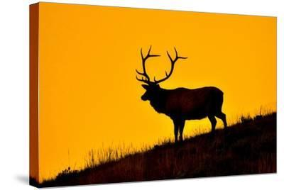 Elk and Sunrise-Lantern Press-Stretched Canvas Print