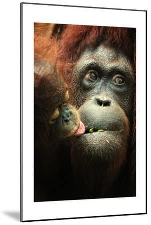 Orangutan and Baby-Lantern Press-Mounted Art Print