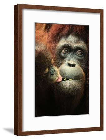 Orangutan and Baby-Lantern Press-Framed Art Print