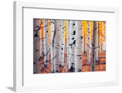 Aspen Forest-Lantern Press-Framed Premium Giclee Print