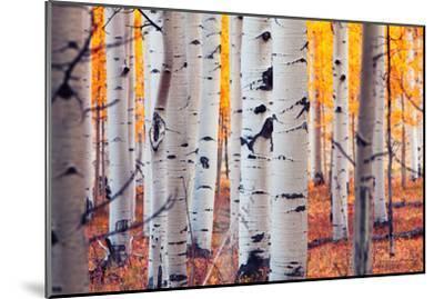 Aspen Forest-Lantern Press-Mounted Premium Giclee Print