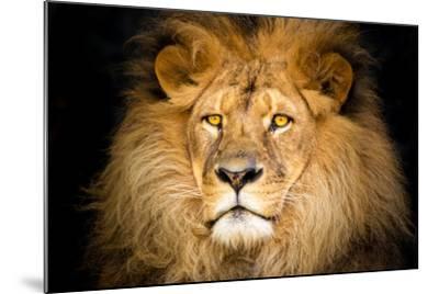 Lion Face-Lantern Press-Mounted Art Print