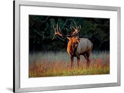 Elk Calling-Lantern Press-Framed Art Print