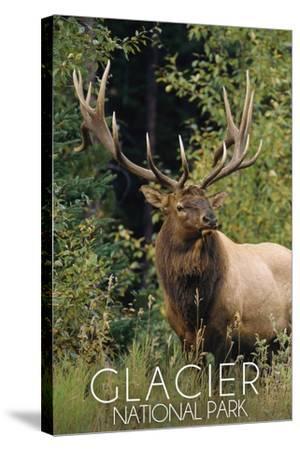 Glacier National Park - Elk Bull-Lantern Press-Stretched Canvas Print