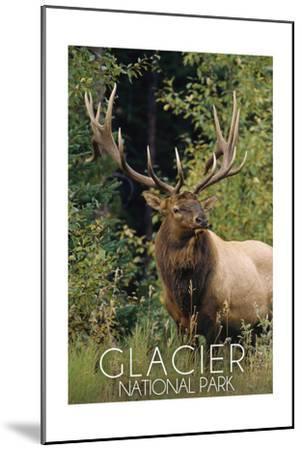 Glacier National Park - Elk Bull-Lantern Press-Mounted Art Print