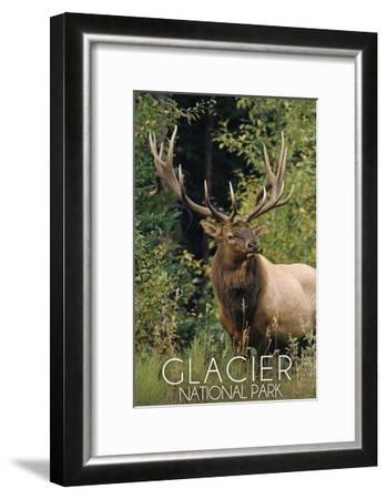 Glacier National Park - Elk Bull-Lantern Press-Framed Art Print