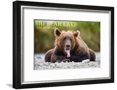 Big Bear Lake, California - Grizzly Bear with Tongue-Lantern Press-Framed Art Print
