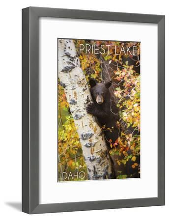 Priest Lake, Idaho - Bear Cub in Tree-Lantern Press-Framed Art Print