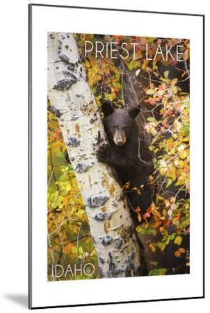 Priest Lake, Idaho - Bear Cub in Tree-Lantern Press-Mounted Art Print