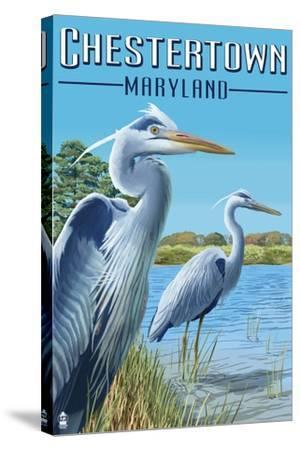 Chestertown, Maryland - Blue Herons in Marsh-Lantern Press-Stretched Canvas Print