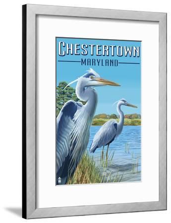 Chestertown, Maryland - Blue Herons in Marsh-Lantern Press-Framed Art Print