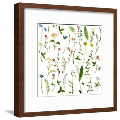 Set of Watercolor Drawing Herbs and Flowers-cat_arch_angel-Framed Art Print
