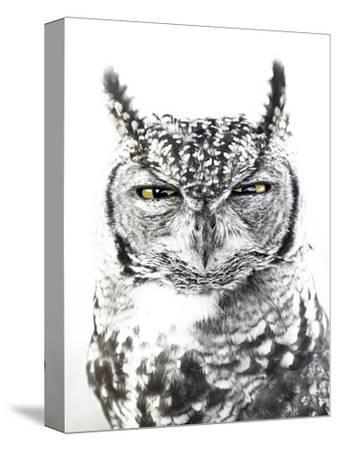 Spotted Eagle Owl, Kgalagadi Transfrontier Park, South Africa-James Hager-Stretched Canvas Print