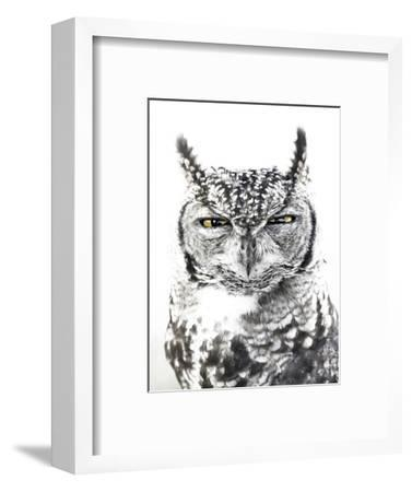 Spotted Eagle Owl, Kgalagadi Transfrontier Park, South Africa-James Hager-Framed Photographic Print