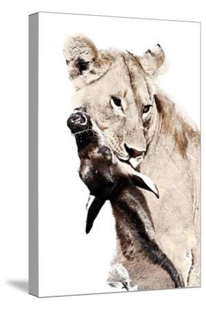 The Kill. A Lioness with a Blue Wildebeest Calf, Serengeti National Park, East Africa-James Hager-Stretched Canvas Print
