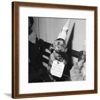 Sally the Dog at Annual Dogs Christmas Party in Bristol, 1958-Maurice Tibbles-Framed Photographic Print