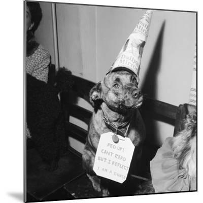 Sally the Dog at Annual Dogs Christmas Party in Bristol, 1958-Maurice Tibbles-Mounted Photographic Print