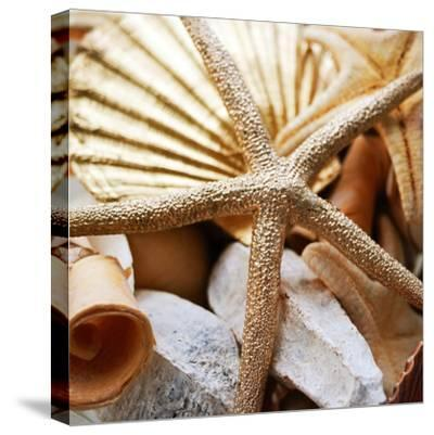 Gold Starfish II-Susan Bryant-Stretched Canvas Print