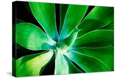 Green Intrigue-Bruce Nawrocke-Stretched Canvas Print