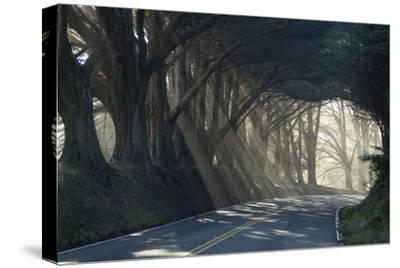 County Road with Sunlight Filtering in Through the Trees, Mendocino, California, Usa-Natalie Tepper-Stretched Canvas Print
