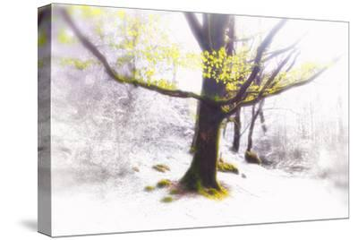 Ashes of Time-Viviane Fedieu Daniel-Stretched Canvas Print