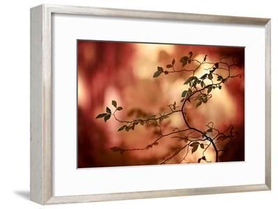 Haiku-Ursula Abresch-Framed Photographic Print
