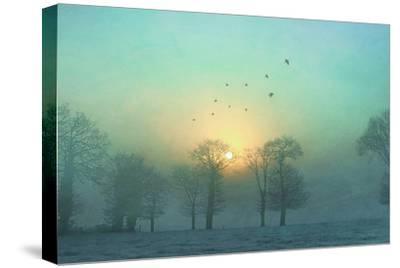 Frozen-Viviane Fedieu Daniel-Stretched Canvas Print