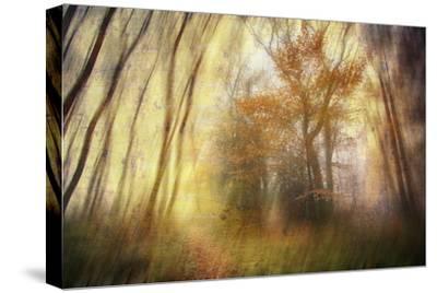 Meet-Viviane Fedieu Daniel-Stretched Canvas Print