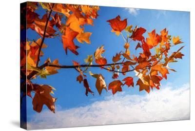 Autumn Colors-Philippe Sainte-Laudy-Stretched Canvas Print