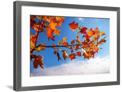 Autumn Colors-Philippe Sainte-Laudy-Framed Photographic Print