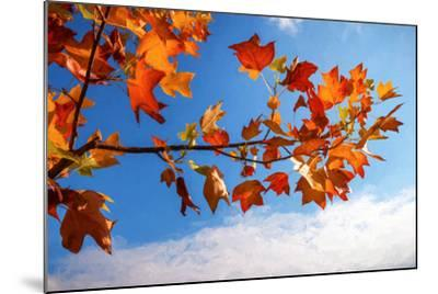 Autumn Colors-Philippe Sainte-Laudy-Mounted Photographic Print