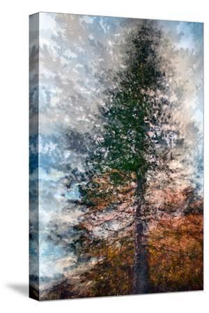 Fir-Ursula Abresch-Stretched Canvas Print