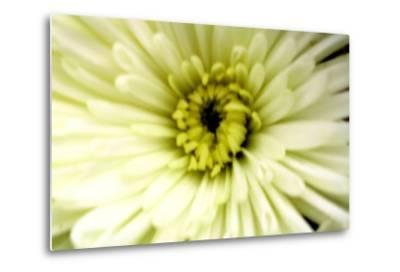 Birthday Flower-Sarah O'Toole-Metal Print
