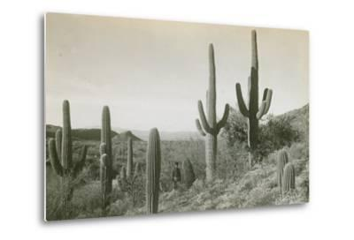 Canon des Coches, Tortolita Mountains, USA-D. T. MacDougal-Metal Print
